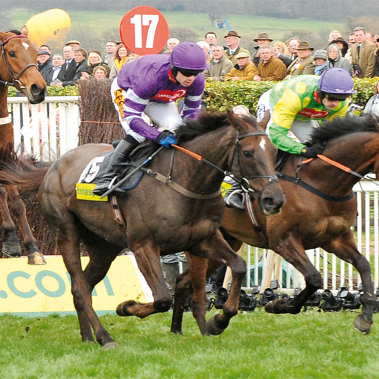 The town is famous for it's world-renowed racecourse which hosts the four-day Cheltenham Festival, featuring the Cheltenham Gold Cup \ Trevor Meeks