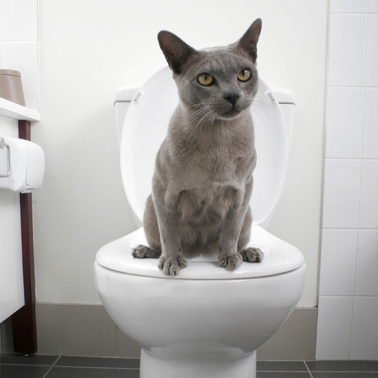 Train Your Cat To Use The Toilet With A New Potty Training